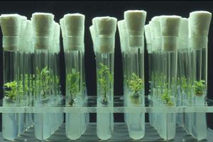 Trees4future Metla Cryopreservation Laboratory